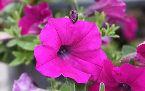 Фото обои макро, цветы, природа, розовое