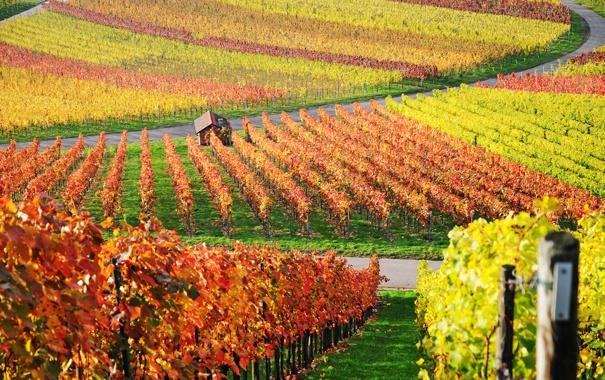 Фото обои дом, фото, обои, пейзажи, виноградники