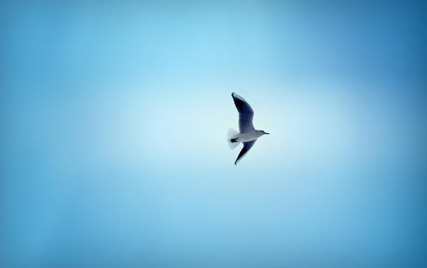 Фото обои небо, птица, чайка