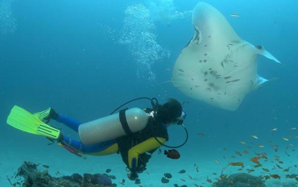 Фото обои рыбы, мир, аквалангист, подводный, ласты