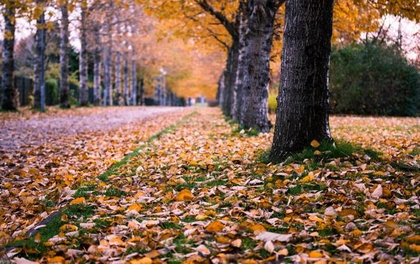 Фото обои осень, город, улица