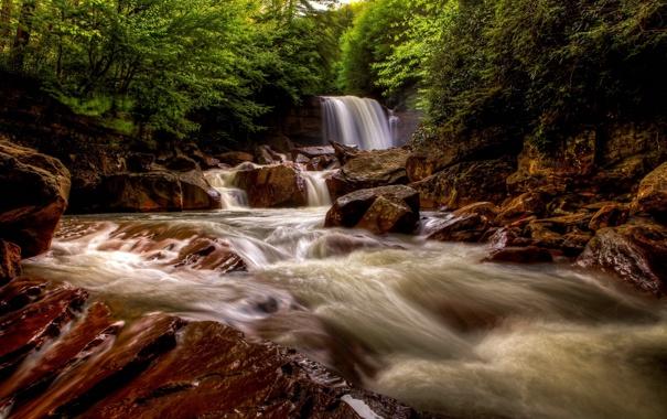 Фото обои лес, река, река Блэкуотер, водопад Дуглас, Douglas Falls, Blackwater River, West Virginia