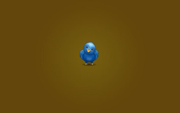Фото обои птицы, птица, обои, минимализм, твиттер, twitter wallpapers
