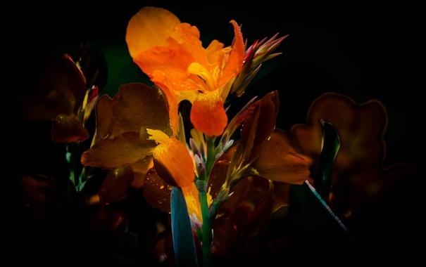 Фото обои свет, природа, лепестки, полумрак