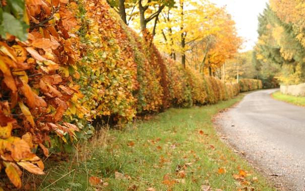 Фото обои дорога, осень, листья, деревья, природа, кусты