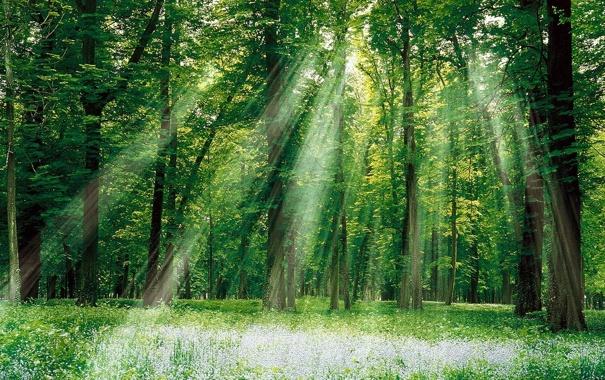 Фото обои лес, трава, листья, солнце, лучи, свет, деревья