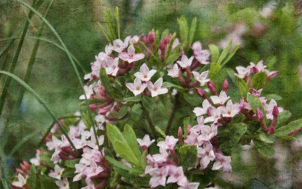 Фото обои цветы, природа, стиль, текстура