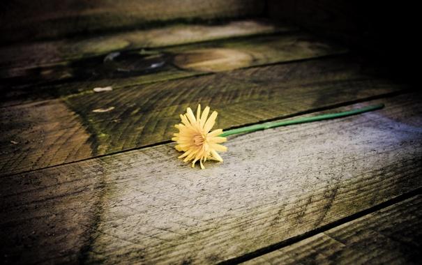 Фото обои цветок, одуванчик, ступеньки