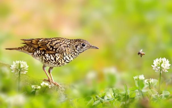 Фото обои лето, трава, макро, цветы, птица, насекомое