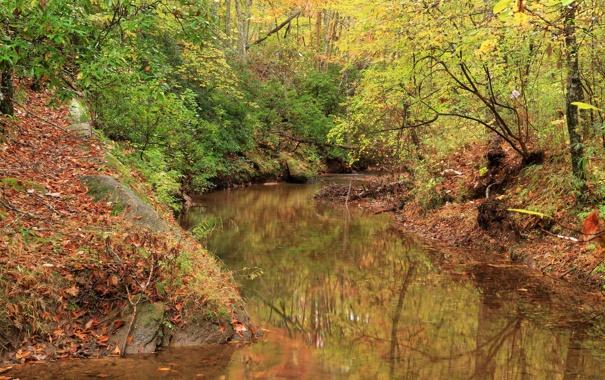 Фото обои осень, лес, деревья, парк, США, речка, Paulding County