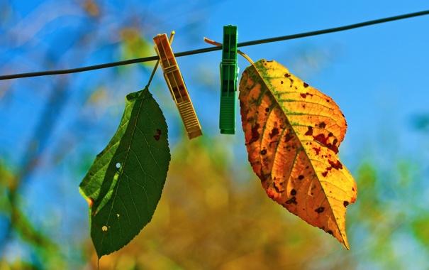 Фото обои два, autumn fades, лстики