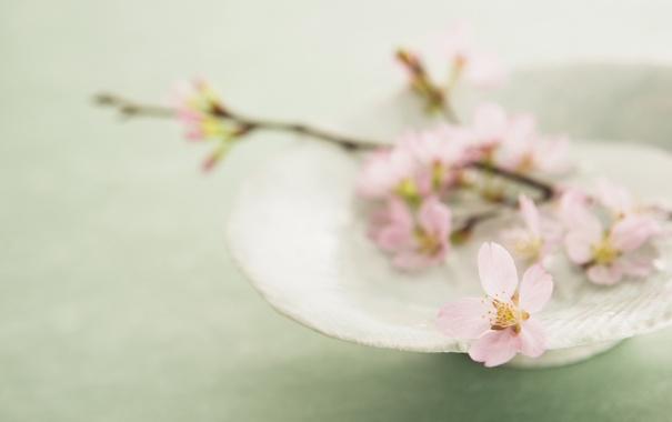 Фото обои цветок, веточка, розовый, лепестки, сакура, тарелка