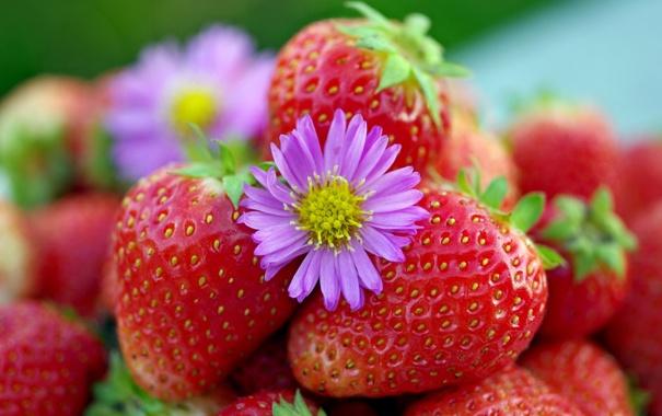 Фото обои макро, ягоды, клубника, цветочек