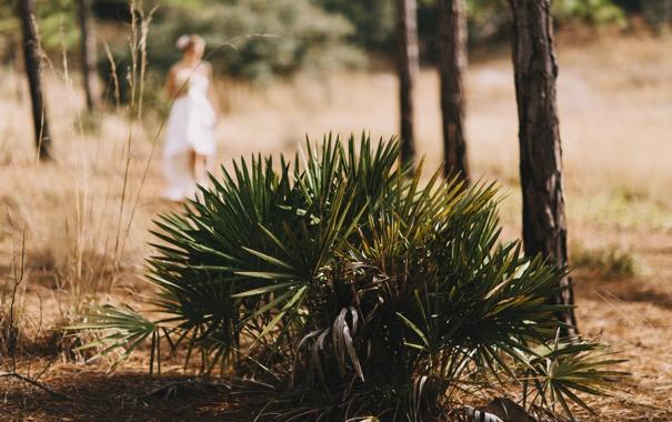 Фото обои листья, девушка, растение, невеста