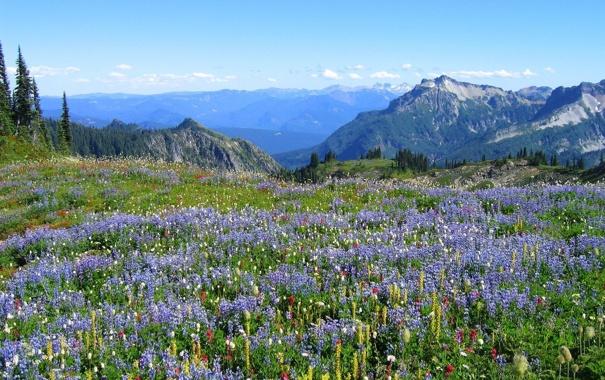 Фото обои небо, цветы, вершины, горные, разные, гор.опушка
