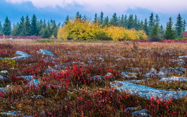 Фото обои осень, небо, деревья, тучи, камни, луг