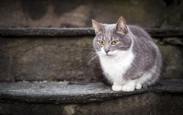 Фото обои кошка, взгляд, ступени