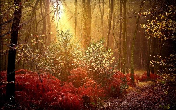 Фото обои осень, лес, природа, краски