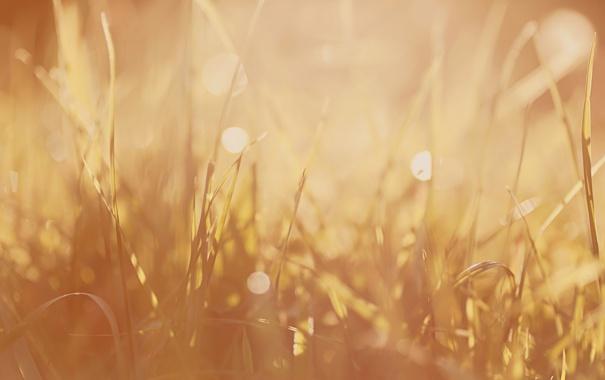 Фото обои растения, макро фотографии, трава, земля, природа