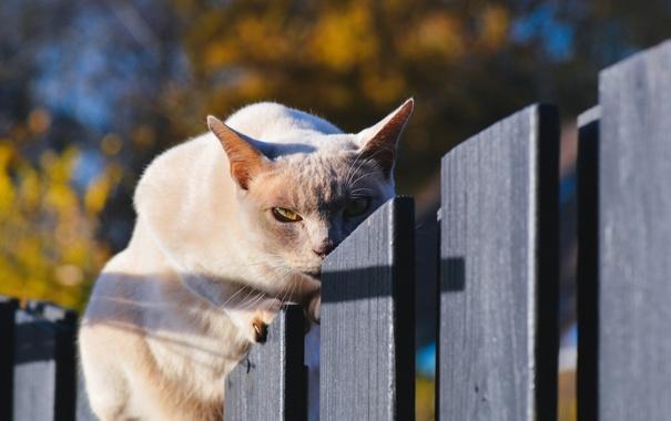Фото обои кошка, кот, забор, кошак