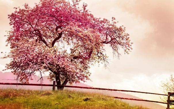 Фото обои tree, spring, pink, blossom