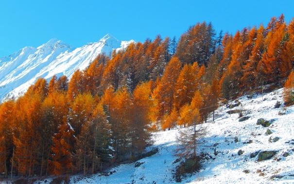 Фото обои осень, небо, снег, деревья, горы, склон