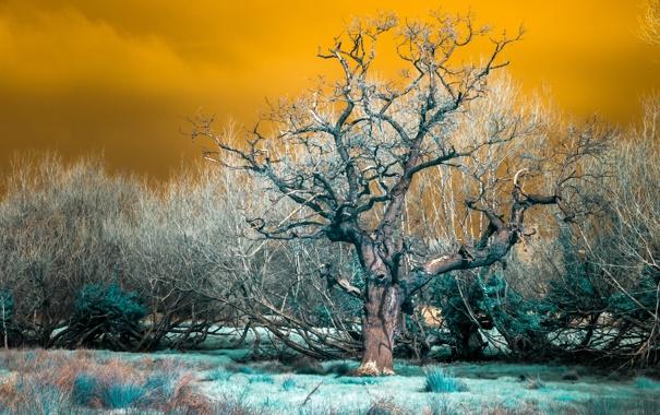 Фото обои природа, дерево, цвет