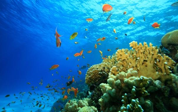 Фото обои море, рыбы, риф