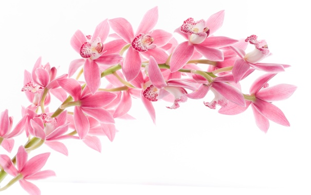 Картинки на рабочий стол орхидеи в природе