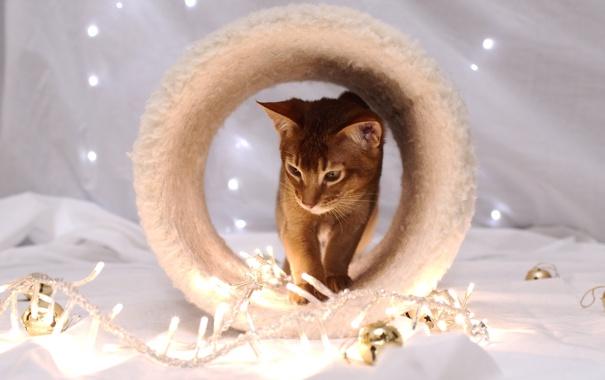 Фото обои кот, домик, гирлянды