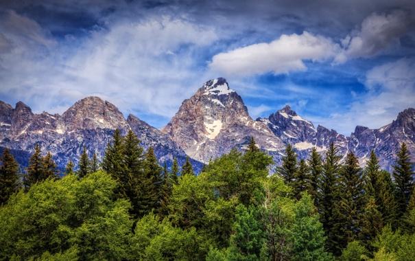 Фото обои деревья, горы, Вайоминг, Wyoming, Гранд-Титон, Grand Teton National Park