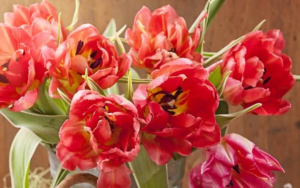 Фото обои фото, Тюльпаны, Крупным планом, Красный. Цветы