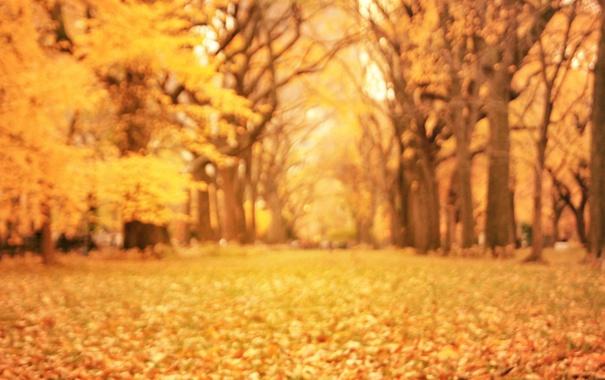 Фото обои осень, листья, деревья, природа, парк, желтые, размытость