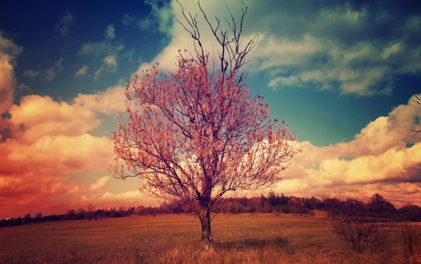Фото обои облака, пейзаж, ветки, дерево, крона