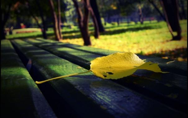 Фото обои осень, скамейка, лист, парк, аллея