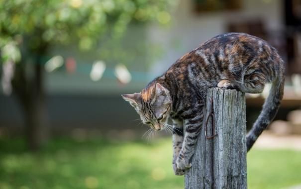 Фото обои животные, котенок, забор, лапы, хвост