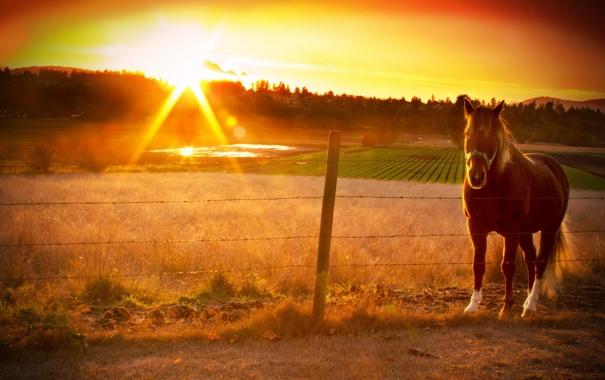 Фото обои закат, конь, забор