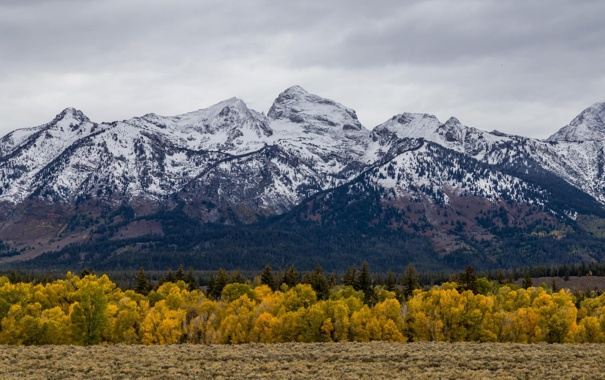 Фото обои осень, лес, пейзаж, горы, природа