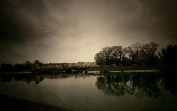 Фото обои пейзаж, осень, деревья, природа, небо, река, птицы
