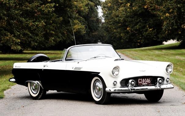 Фото обои деревья, Ford, Форд, кабриолет, аллея, 1956, Thunderbird