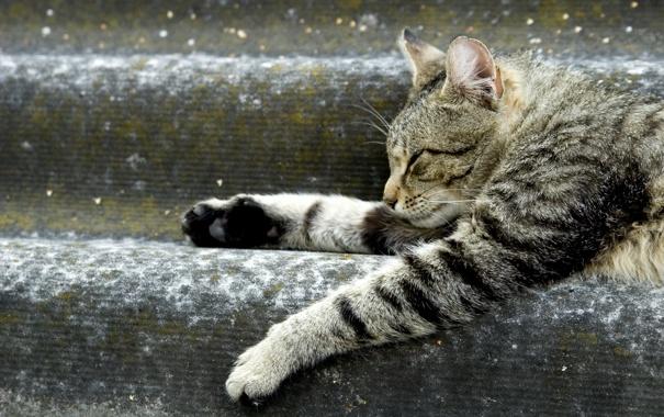 Фото обои кот, животное, лапки, лежит, ступеньки, отдыхает
