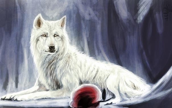 Фото обои красное, лежа, белый, волк, арт, яблоко