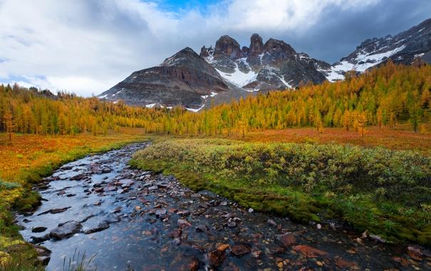Фото обои осень, лес, небо, листья, облака, снег, деревья