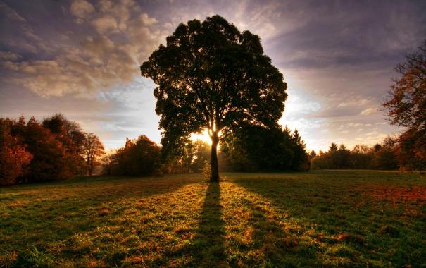 Фото обои поле, осень, солнце, дерево, тень