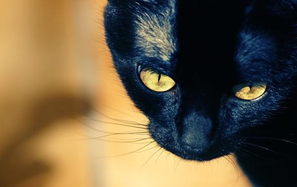 Фото обои кошка, усы, взгляд