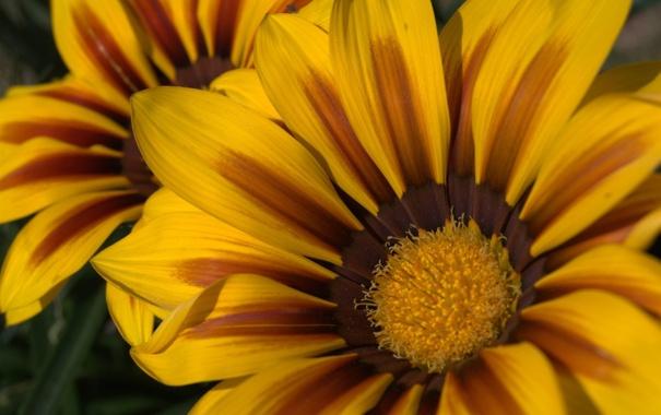 Фото обои лепестки, пятна, жёлтые, расцветка