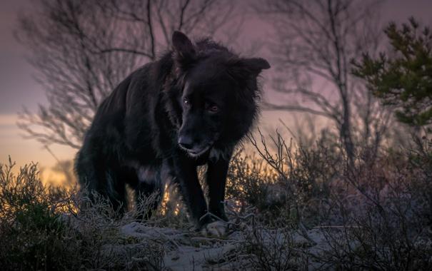 Фото обои зима, взгляд, друг, собака