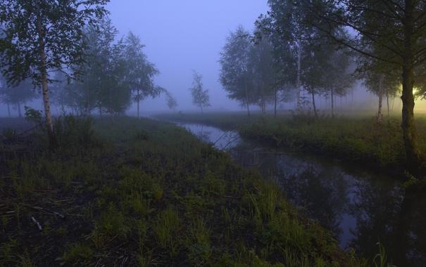 Фото обои деревья, природа, туман, фото, дымка, леса