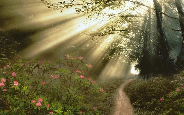 Фото обои лес, цветы, дорожка, поток света