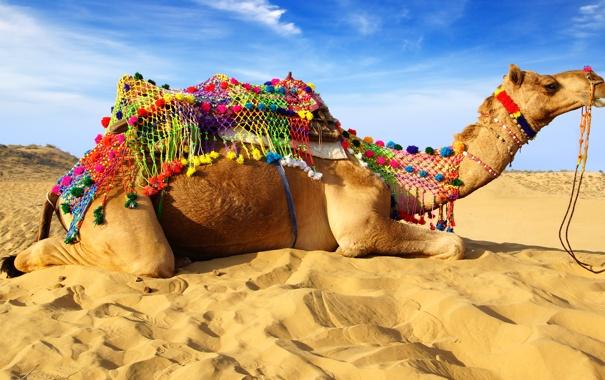 Фото обои песок, облака, верблюд